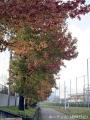 紅葉を撮りに公園へ行く2