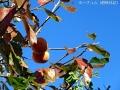 小さい秋を楽しむ