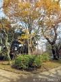 2019年秋の高岡古城公園6