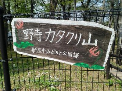 野寺カタクリ山