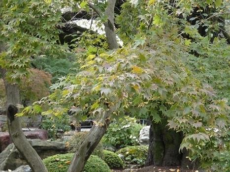 きれぎれの風彩 「丸山公園、その他 1019」191022-11