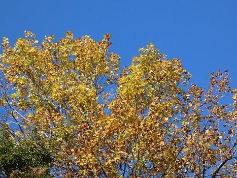 きれぎれの風彩 「北本自然観察公園1110」191122-09