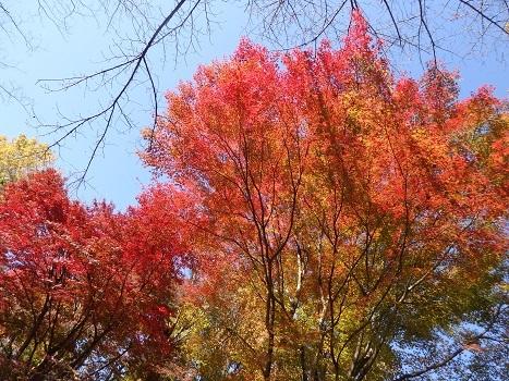 きれぎれの風彩「神流川沿いの紅葉など 1116」191204-01