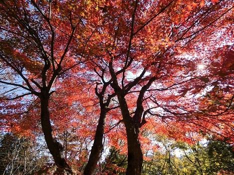 きれぎれの風彩「神流川沿いの紅葉など 1116」191204-02