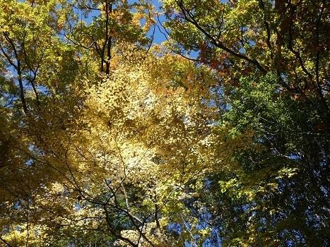 きれぎれの風彩「神流川沿いの紅葉など 1116」191204-03