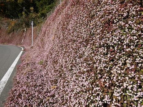 きれぎれの風彩「神流川沿いの紅葉など 1116」191204-07