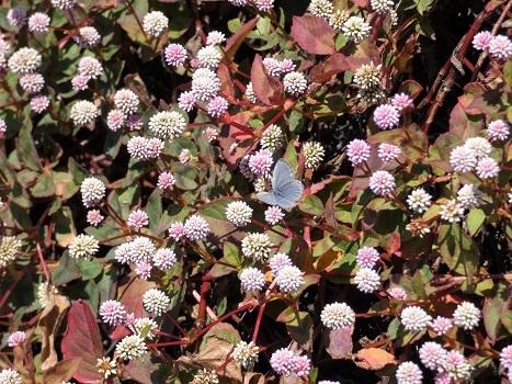 きれぎれの風彩「神流川沿いの紅葉など 1116」191204-09