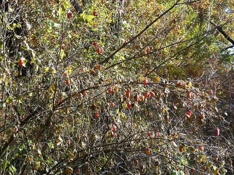 きれぎれの風彩 「北本自然観察公園1110-1201」191209-05