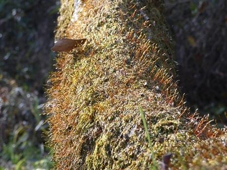 きれぎれの風彩 「北本自然観察公園1110-1201」191209-07