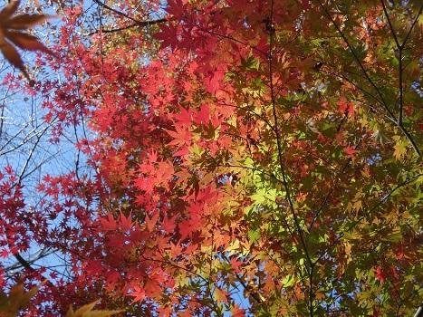 きれぎれの風彩 「北本自然観察公園1110-1201」191212-01