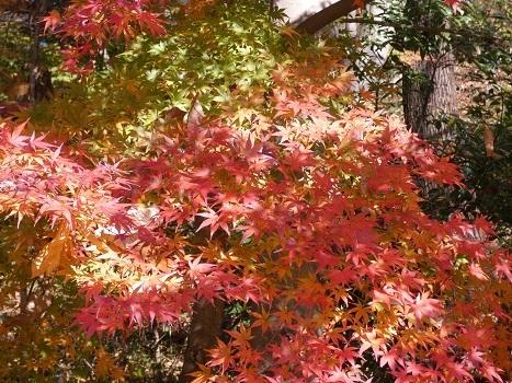 きれぎれの風彩 「北本自然観察公園1110-1201」191212-02