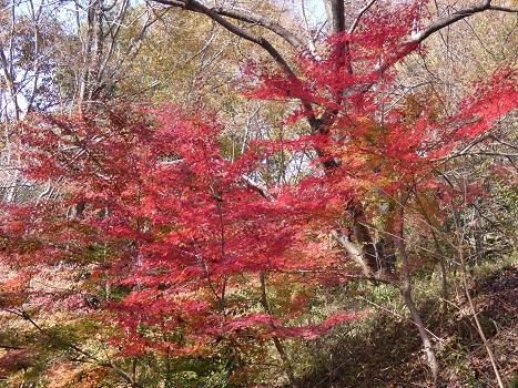 きれぎれの風彩 「北本自然観察公園1110-1201」191212-03