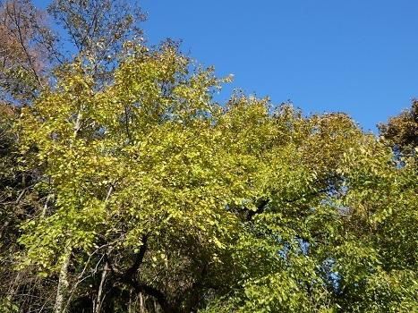 きれぎれの風彩 「北本自然観察公園1110-1201」191212-05