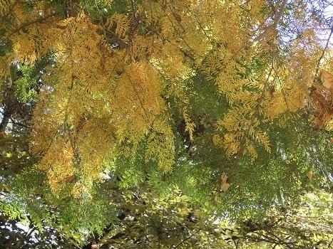 きれぎれの風彩 「北本自然観察公園1110-1201」191212-07