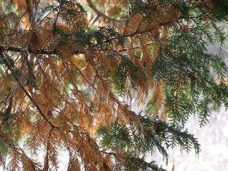 きれぎれの風彩 「北本自然観察公園1110-1201」191212-09