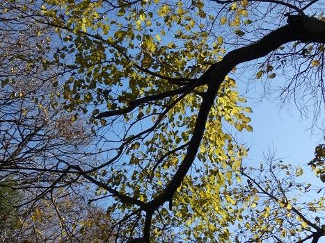 きれぎれの風彩 北本自然観察公園191229-01_09