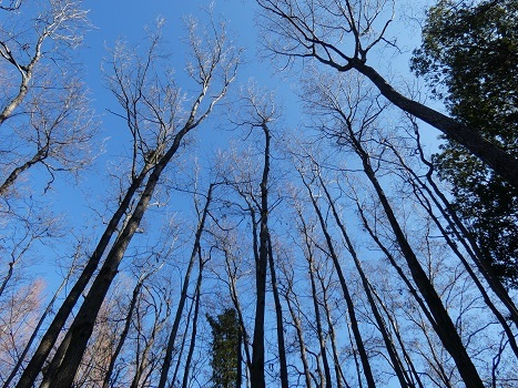 きれぎれの風彩「伊奈公園の高木 0113」200126-02