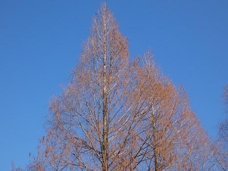 きれぎれの風彩「伊奈公園の高木 0113」200126-05