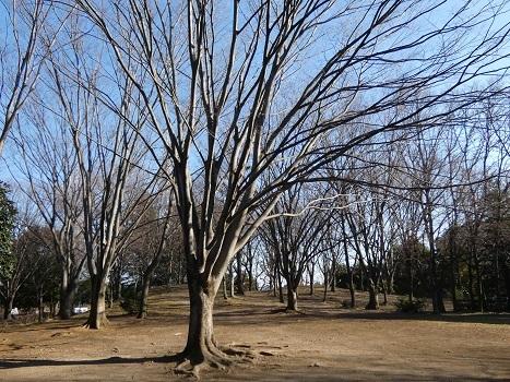 きれぎれの風彩「伊奈公園の高木 0113」200126-07