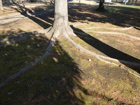 きれぎれの風彩「伊奈公園の高木 0113」200126-08