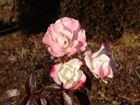 きれぎれの風彩「伊奈公園 0113」200201-03