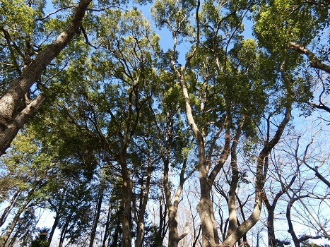 きれぎれの風彩「丸山公園 0119」200209-05