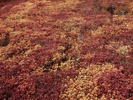 きれぎれの風彩「丸山公園 0119」200209-09