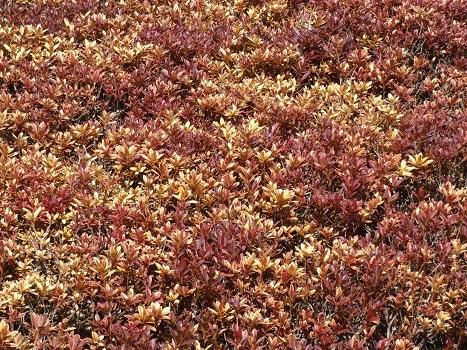 きれぎれの風彩「丸山公園 0119」200209-10