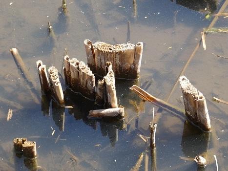 きれぎれの風彩「北本自然観察公園 0224」200307-07