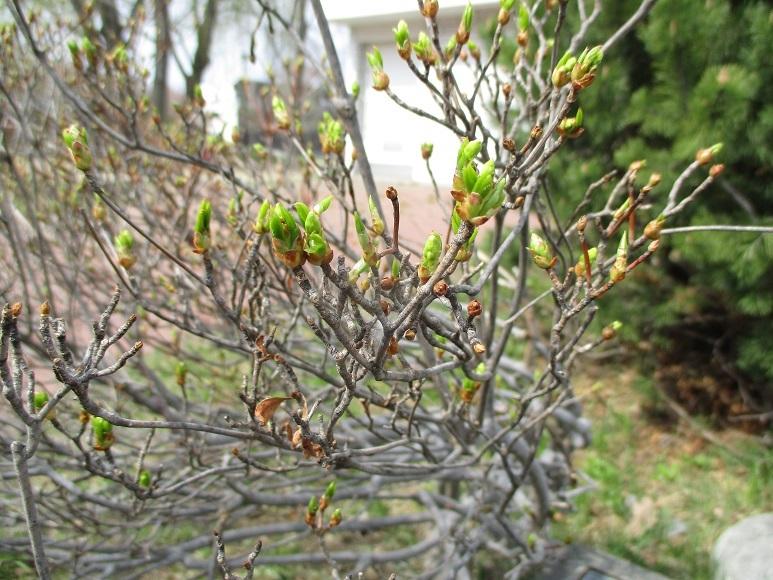新緑新芽早春200503