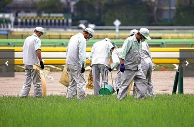 丹念に手入れされている東京競馬場の芝コース