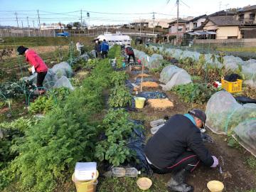 農園と間引き菜