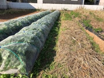 畝作り4畝マルチ張り4