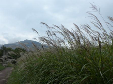 タデ原湿原 風景 1