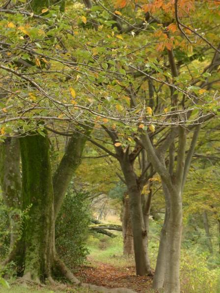少し色付く木々