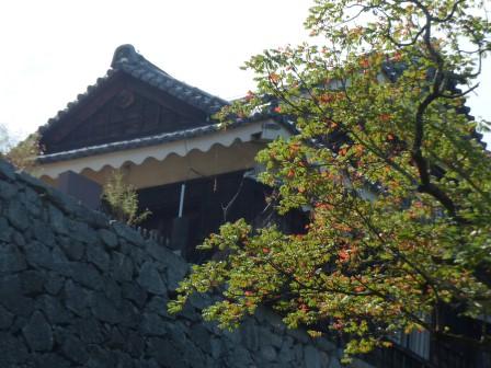 桜の紅葉 1