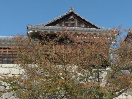 桜の紅葉 2