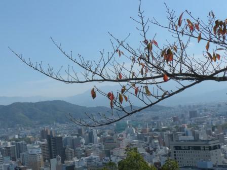 桜の紅葉 6