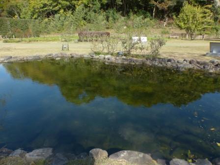 池に映る景色 1