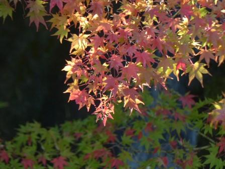 松山城二之丸史跡庭園 滝と紅葉 3