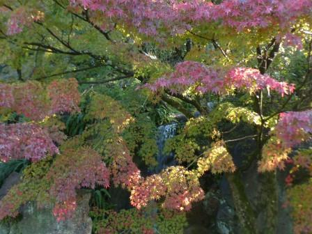 松山城二之丸史跡庭園 滝と紅葉 1