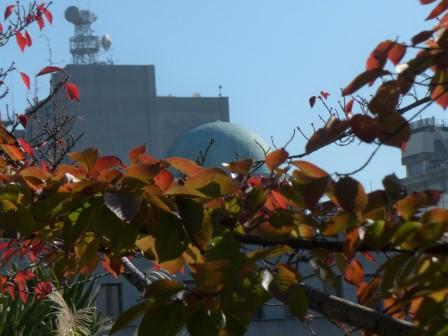 桜の紅葉 3