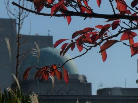桜の紅葉 4