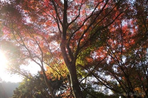 19-11-11-01.jpg