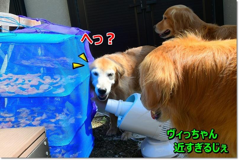 DSC_9443え~?