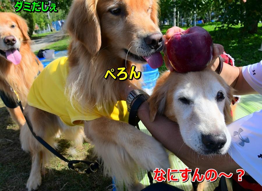 DSC_0635りんご~♪