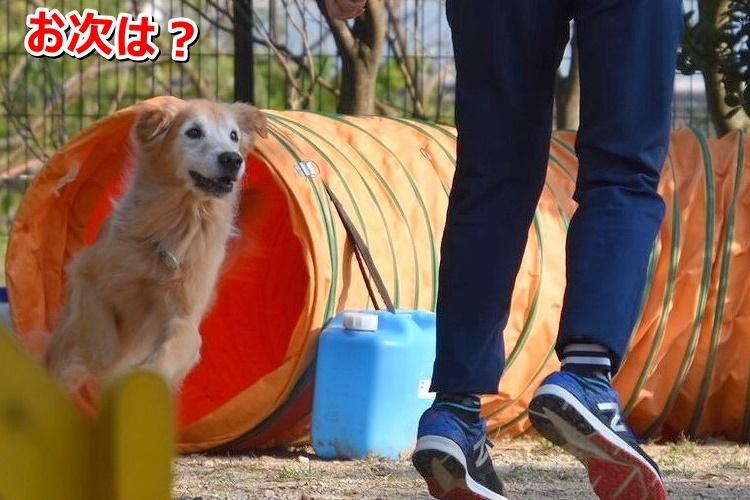 20191027 運動会_191029_0080