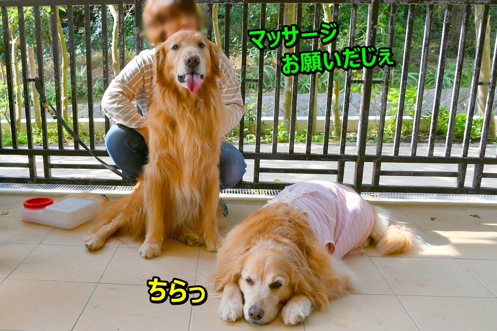 DSC_0913あじ~