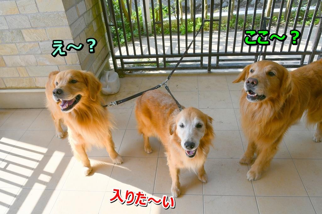 DSC_0921え~ここ~?