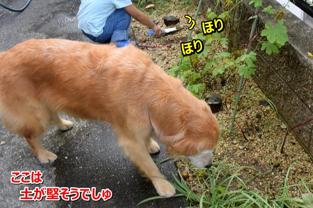 DSC_7351ほりほり